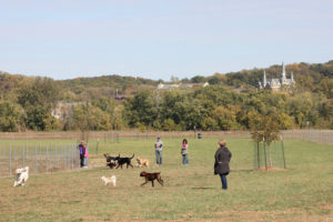 Best Dog Parks in Kansas City